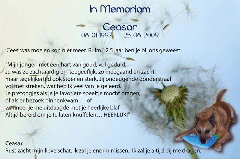 IN MEMORIAM-CEASAR